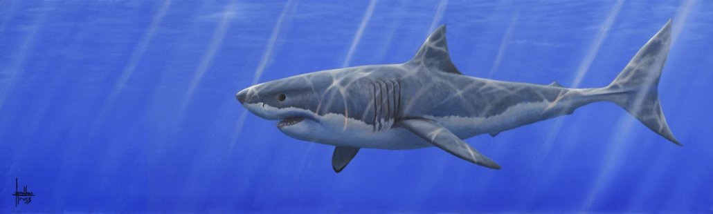 Image 1 of Great White