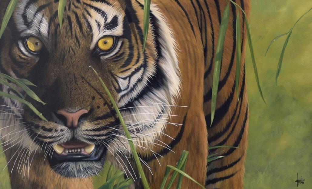 Image 1 of Tiger Tiger